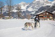 2017-02-11--Schlittenhunderennen-Lenk-012