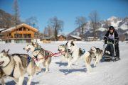 2017-02-11--Schlittenhunderennen-Lenk-013