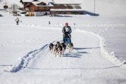2017-02-11--Schlittenhunderennen-Lenk-021
