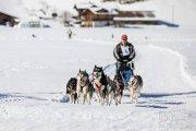 2017-02-11--Schlittenhunderennen-Lenk-023