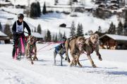 2017-02-11--Schlittenhunderennen-Lenk-034