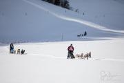 2017-02-11--Schlittenhunderennen-Lenk-035