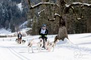 2017-02-11--Schlittenhunderennen-Lenk-045