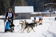 2017-02-11--Schlittenhunderennen-Lenk-059
