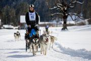 2017-02-11--Schlittenhunderennen-Lenk-063