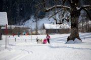2017-02-11--Schlittenhunderennen-Lenk-065