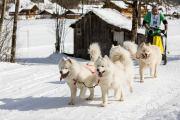 2017-02-11--Schlittenhunderennen-Lenk-072