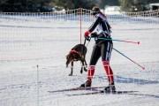 2017-02-11--Schlittenhunderennen-Lenk-001