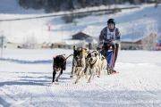 2017-02-11--Schlittenhunderennen-Lenk-010