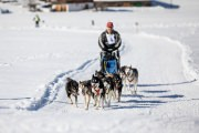 2017-02-11--Schlittenhunderennen-Lenk-022
