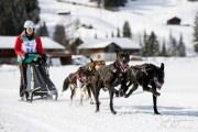 2017-02-11--Schlittenhunderennen-Lenk-029