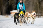 2017-02-11--Schlittenhunderennen-Lenk-041
