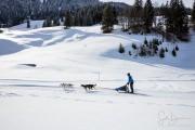 2017-02-11--Schlittenhunderennen-Lenk-043