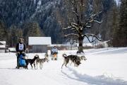 2017-02-11--Schlittenhunderennen-Lenk-061