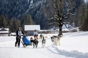 2017-02-11--Schlittenhunderennen-Lenk-062