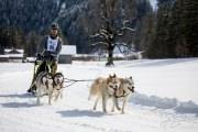 2017-02-11--Schlittenhunderennen-Lenk-064