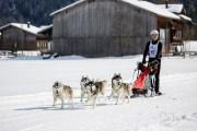 2017-02-11--Schlittenhunderennen-Lenk-068