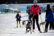 Schlittenhunderennen Les Mosses 2016 - 005