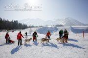 Schlittenhunderennen Les Mosses 2016 - 030