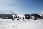 Schlittenhunderennen Les Mosses 2016 - 035