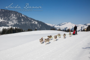 Schlittenhunderennen Les Mosses 2016 - 036