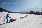 Schlittenhunderennen Les Mosses 2016 - 039