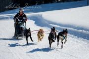 Schlittenhunderennen Les Mosses 2016 - 044