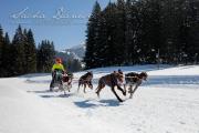 Schlittenhunderennen Les Mosses 2016 - 046