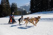 Schlittenhunderennen Les Mosses 2016 - 047