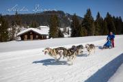 Schlittenhunderennen Les Mosses 2016 - 048