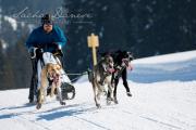 Schlittenhunderennen Les Mosses 2016 - 049