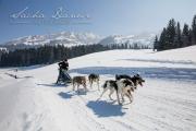 Schlittenhunderennen Les Mosses 2016 - 053