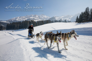 Schlittenhunderennen Les Mosses 2016 - 055