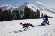 Schlittenhunderennen Les Mosses 2016 - 063