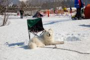 Schlittenhunderennen Les Mosses 2016 - 071