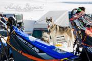 Schlittenhunderennen Les Mosses 2016 - 076