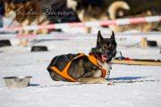 Schlittenhunderennen Les Mosses 2016 - 083
