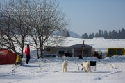 Schlittenhunderennen Les Mosses 2016 - 006