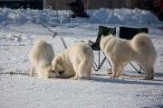 Schlittenhunderennen Les Mosses 2016 - 012