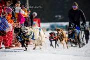 Schlittenhunderennen Les Mosses 2016 - 024