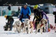 Schlittenhunderennen Les Mosses 2016 - 026