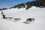 Schlittenhunderennen Les Mosses 2016 - 040