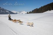 Schlittenhunderennen Les Mosses 2016 - 042
