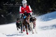 Schlittenhunderennen Les Mosses 2016 - 045