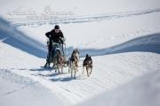 Schlittenhunderennen Les Mosses 2016 - 052