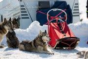 Schlittenhunderennen Les Mosses 2016 - 069